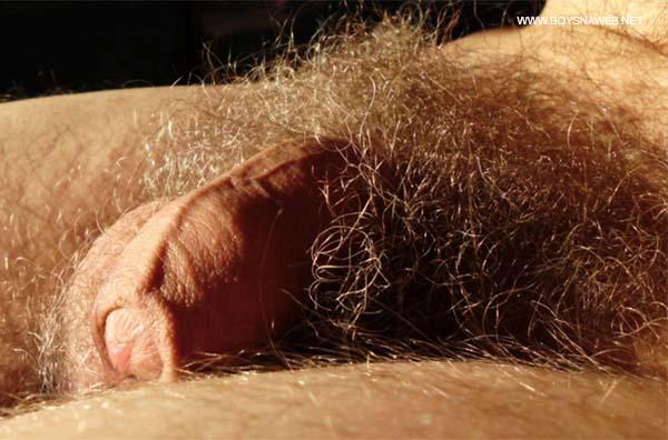 loiro mini cacete pentelhudo super peludo pelos pubianos gay amador-min